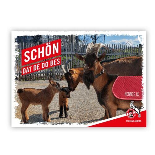 """1 FC Köln Postkarte Grußkarte Hennes /""""Schön dat de do bes/"""""""
