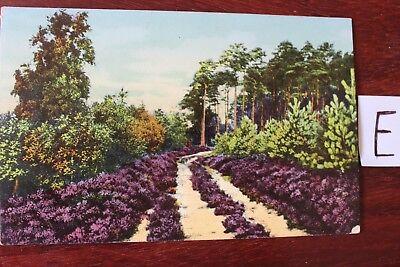 Gewidmet Postkarte Ansichtskarte Niedersachsen Lithografie