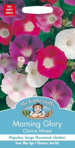 Morning Glory Choice Mixed 50 Seeds Mr Fothergills Flower