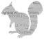 word art picture personalised gift present keepsake Squirrel SCHOOL NURSERY