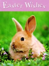 Easter Wishes Cute Bunny Small Greeting Card Photo Art Greetings Cards