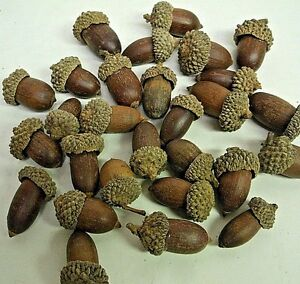 48+ Artificial Acorns Fall Autumn Thanksgiving Crafts Home Nature Decor