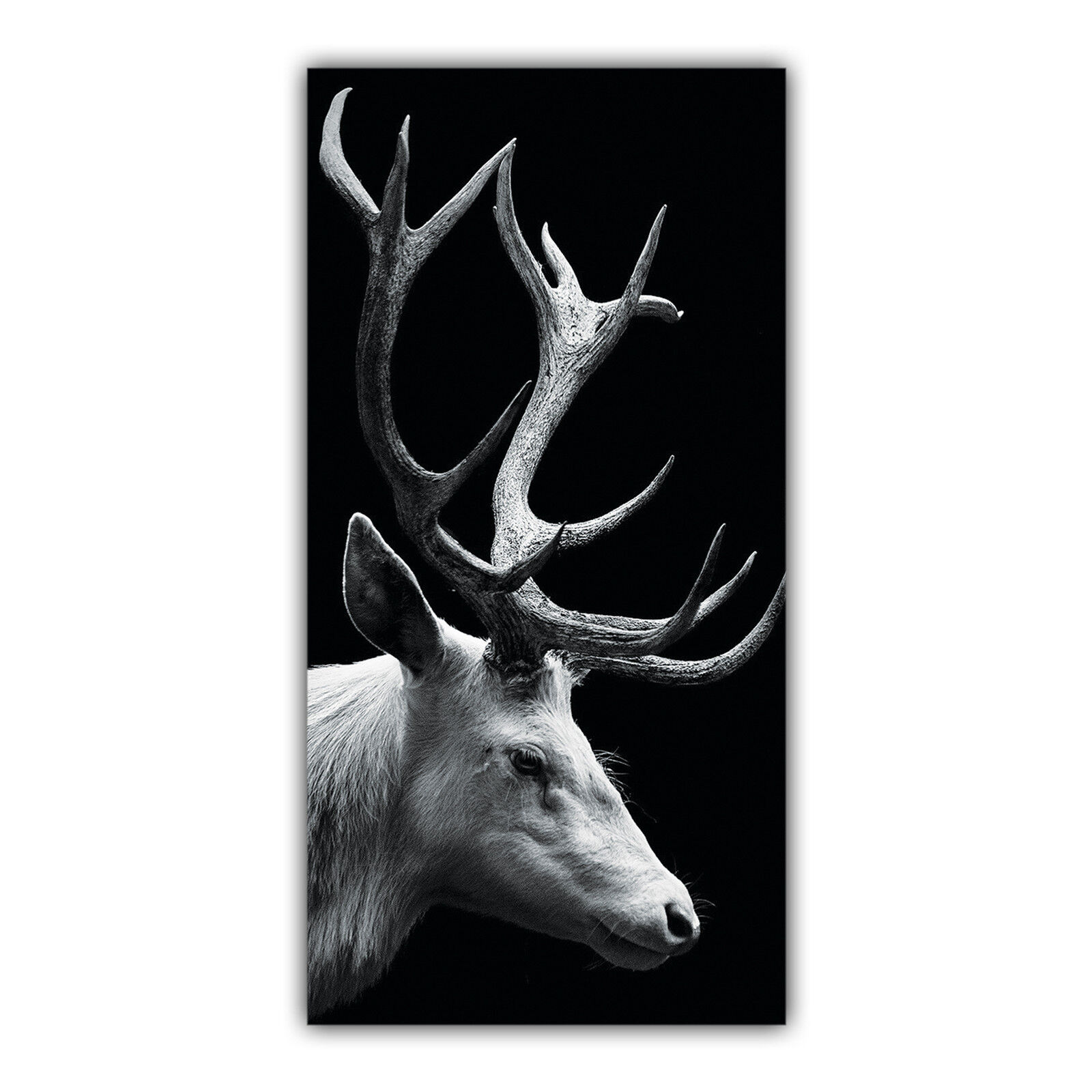 Cerf Tableau Poster Décoration Photo Nature Nature Photo Animal