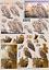 2*Non-die-cut Le Suh Decoupage Sheets Owls Owl /& Hawks various