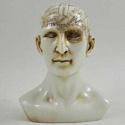 Head Sculpture Phrenology Decor Vintage Medical Ornament