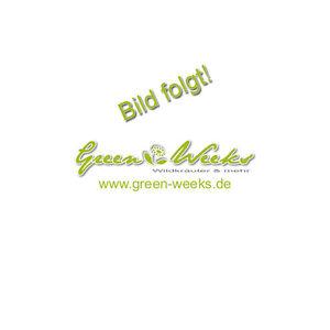 Eragrostis tef 10000 Samen Teff Glutenfrei Saatgut 001445