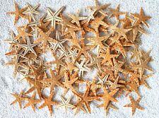 100 x echte Seesterne ca. 2-4cm flache Seesterne, haltbar präpariert Starfish