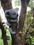 Novelty-Resin-Garden-Tree-Hugger-Peeker-Animal-Fairy-Ornament-Outdoor-Fence-Shed thumbnail 22