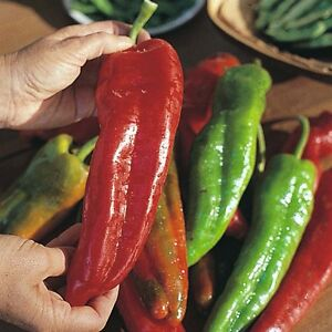 SWEET-PEPPER-SWEET-BANANA-260-SEEDS