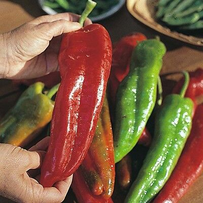 SWEET PEPPER - SWEET BANANA - 200 SEEDS