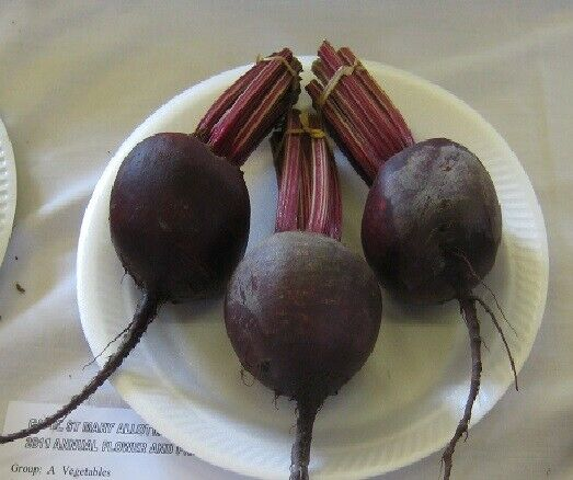 (153)'KINGS' QUALITY beet root red ace f1 seeds - salad Vegetable