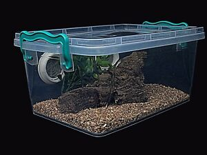 Tarantula Scorpions Millipedes Vivarium Tank Enclosure With Metal