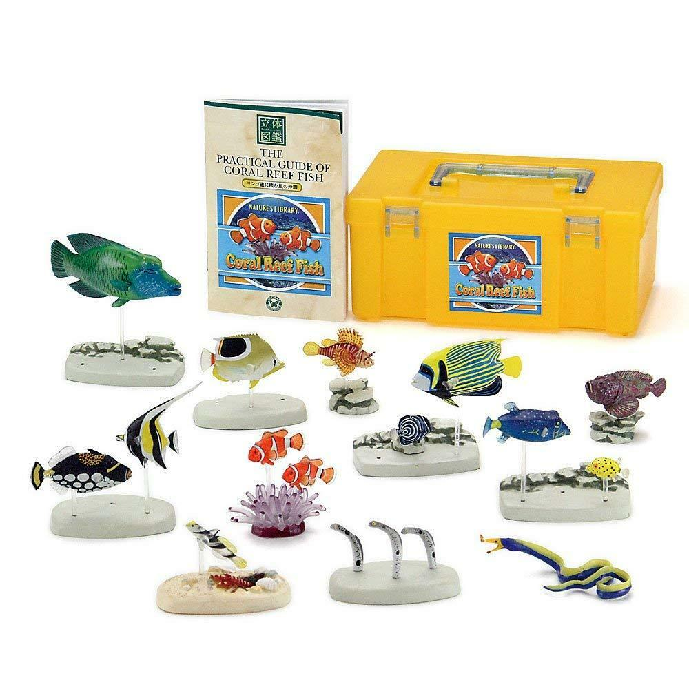 Farbeata 3D Real Figure Box Nature's Library Coral Reef Fish Action figure Japan