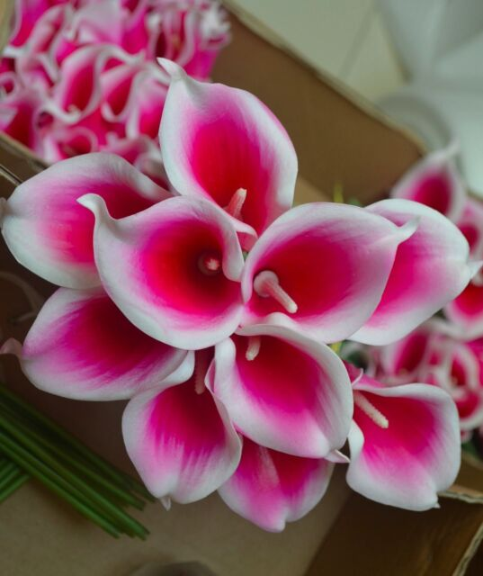 10pcs Hot Pink Picasso Calla Lilies Real Touch Flowers for Silk ...