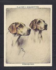 1939 Arthur Wardle Dog Art Head Portrait Player Cigarette Card English Foxhound