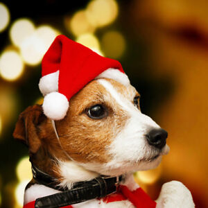 Christmas Dog.Details About Christmas Pet Santa Hat Small Puppy Cat Dog Xmas Holiday Costume Ornamentsblca