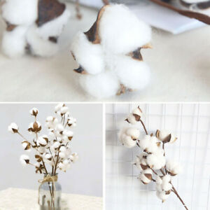 Natural Dried Flowers Cotton Head Branch Artificial Plant DIY Home Party Decor