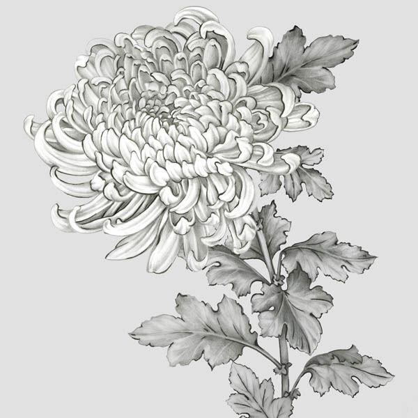 EVA EVA EVA Watts  Grigio botanico I barella-immagine Schermo fiori PIANTA 253d7b