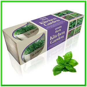 Kitchen herb planter windowsill garden box plant pot kit Kitchen windowsill herb pots