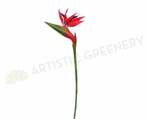 Clearance Stock Strelitzia 90cm Red Bird of Paradise