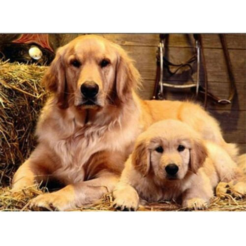 5D Diamond Painting Full Drill Embroidery Cross Stitch Kits Two Dogs Home Decors