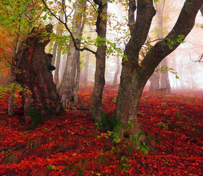 3D Wald Rotes Land 123 Fototapeten Wandbild Fototapete BildTapete Familie DE