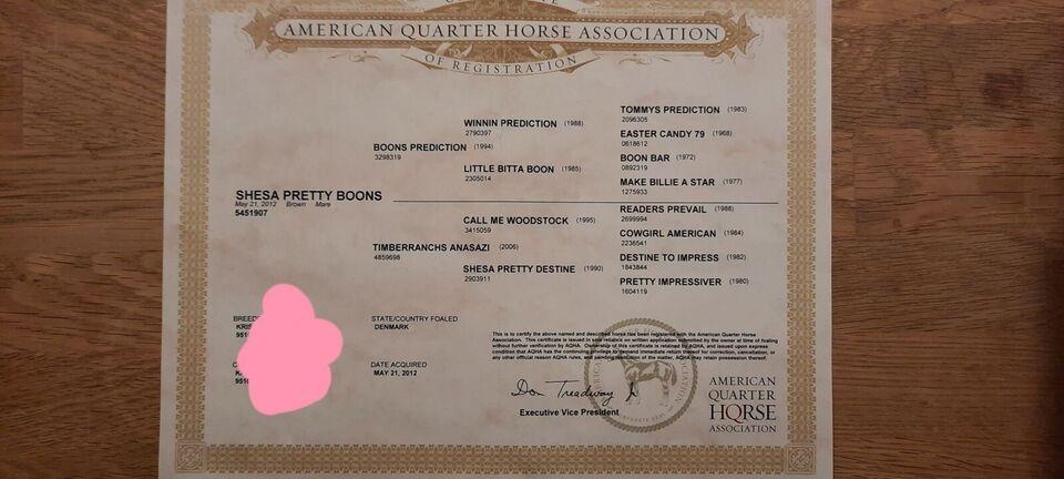 American Quarterhorse, hoppe, 9 år