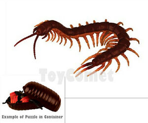 Details about Giant Scolopendra Disgusting Bug Animal 4D 3D Puzzle  Realistic Model Kit Toy