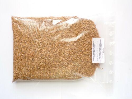 - White Mustard - Engrais Vert - Green Manu - SEM02 Moutarde Sinapis Alba L