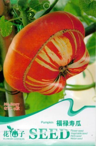 Original Package 4 Hat Shape Rare Pumpkin Seeds Cushaw Cucurbita B097