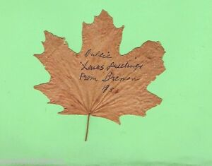D85-1951-DRIED-CANADIAN-MAPLE-LEAF-WITH-CHRISTMAS-GREETINGS