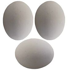 3 PACK WHITE CERAMIC DUMMY BIRD QUAIL NEST EGG HATCHING CRAFT NESTING TRAIN DOVE
