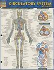 Circulatory System: Advanced by Barcharts (Paperback / softback, 2013)