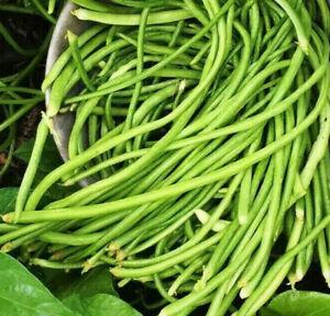 White Yard Long Bean Seeds | Organic USA Asparagus Green Asian Chinese For 2021