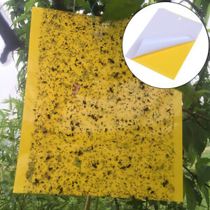 Yellow-sticky-insect-killer-whitefly-thrip-fruit-fly-gnat-leafminer-trap-gt-vPTU-px