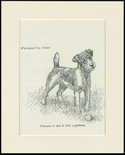WIRE FOX TERRIER LOVELY VINTAGE 1930/'S DOG ART PRINT by KF BARKER READY MOUNTED