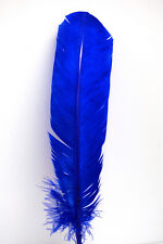 """10 TURKEY QUILLS 10-12"""" Dyed ROYAL BLUE Craft Feathers; Indian Dress Costume"""