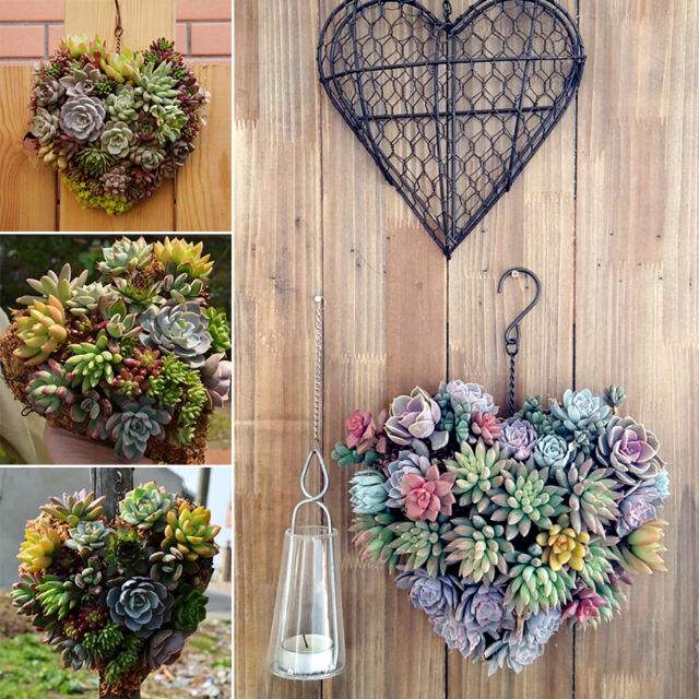 Heart Iron Hanging Plant Basket Garden Succulent Flower Pot Hook Decorations