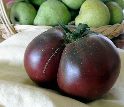 ORGANIC VEGETABLE TOMATO BRANDYWINE BLACK 60 FINEST SEEDS