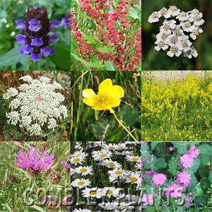 WILDFLOWER-PERENNIAL-MEADOW-SEED-MIX-NO-GRASS-15-GRAMS-wild-flower-seeds