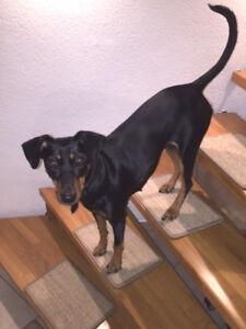 Das Bild Wird Geladen BELLOsteps Stufenmatten Fuer Grosse Hunde Ohne Kleber Aus