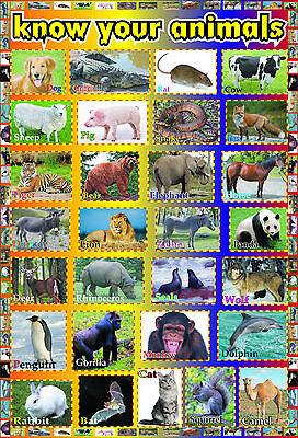 laminated  ANIMALS EDUCATIONAL KIDS POSTER | wildlife children school teaching