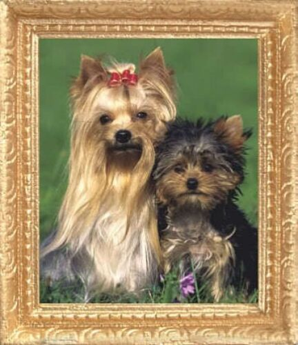 MADE IN USA YORKSHIRE TERRIERS Dollhouse Picture FAST DELIVERY Miniature Art
