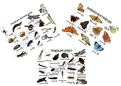 MINI NATURE SPOTTER SHEETS,PERFECT FOR BUG HUNTS /& POND DIPPING