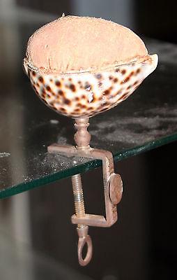CLAMP COWRIE SHELL;c1850 Heming Bird, ORIGINAL RaRe ANTIQUE  FIGURAL~