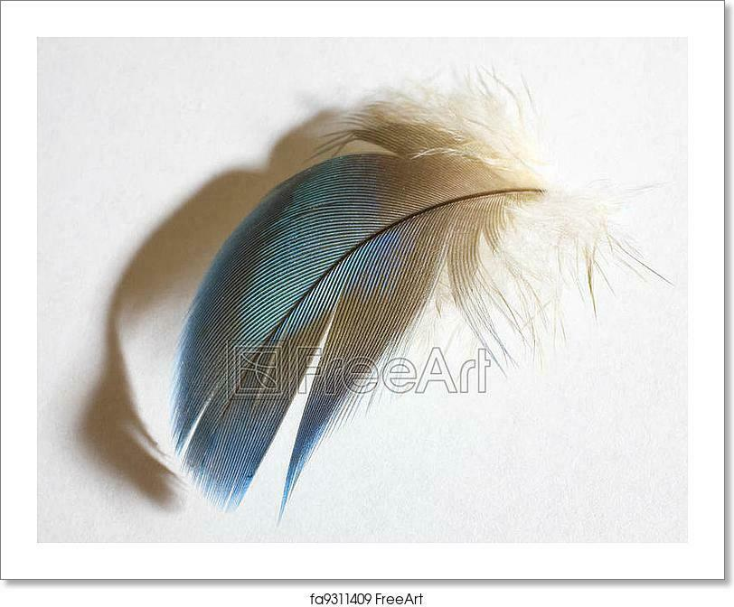 Shadowy Feather Art Print Home Decor Wall Art Poster - D