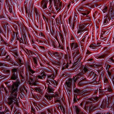 50X Lots Red Worm Fishing Lures Bait Earthworm Baits Crankbaits Hooks Tackle