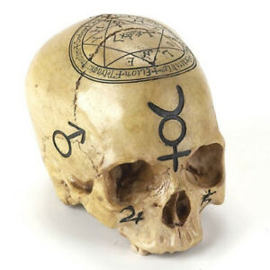 Realistic alchemy skull figurine 6 5 solomon kabbalah for Alchemy skull decoration