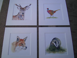 Watercolour-Fox-Pheasant-Stag-Badger-Prints-x-4-in-mounts-6-034-x-6-034