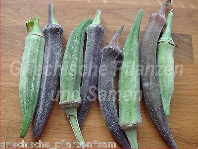 🔥  Okra rot und grün* mediterranes Feingemüse* je 10 Samen
